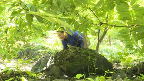 Những cây na trên đồi núi dốc của gia đình chị Lăng Thị Phú ở xã Quang Lang, huyện Chi Lăng, tỉnh Lạng Sơn.