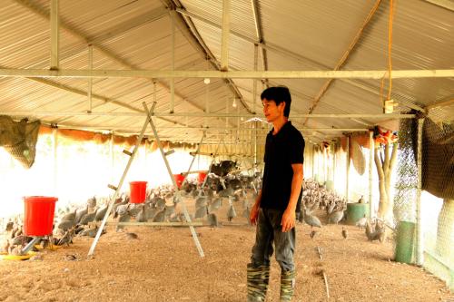 Anh Nguyễn Trọng Thuân đi kiểm tra chuồng gà sao.