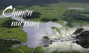 Đầm lầy cá sấu xiêm trong rừng Nam Cát Tiên