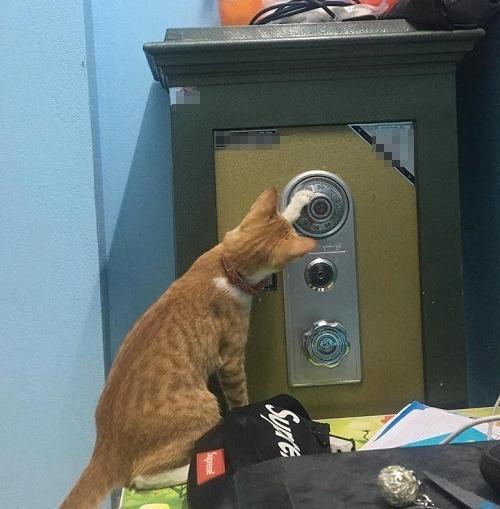 Chú mèo mở trộm két sắt của chủ nhà - 2