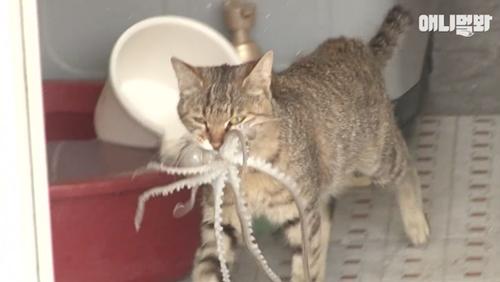 Trộm bạch tuộc, mèo bị con mồi phản công - 1
