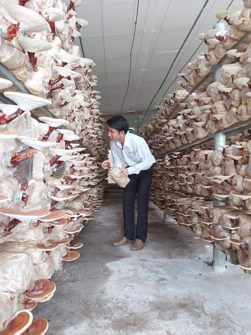 Mô hình trồng nấm của anh Nguyễn Chí Thành, xã Tân Lập, huyện Đồng Phú, tỉnh Bình Dương.