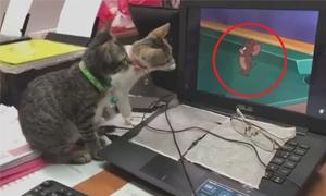 Trộm bạch tuộc, mèo bị con mồi phản công - 6