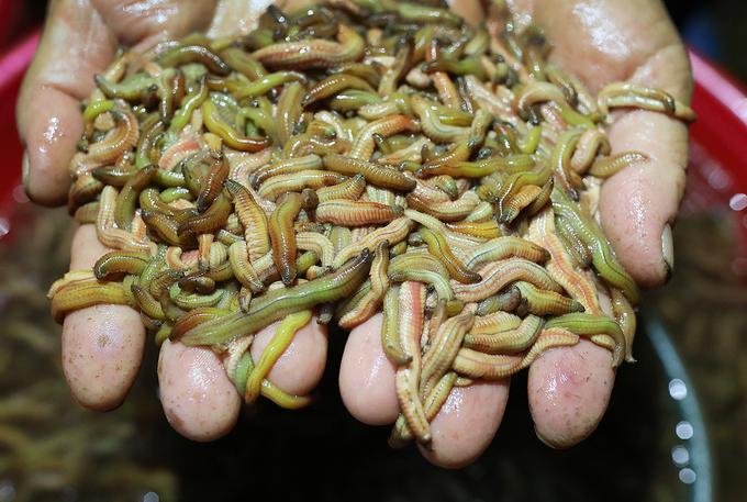 Nông dân vào mùa thu hoạch rươi