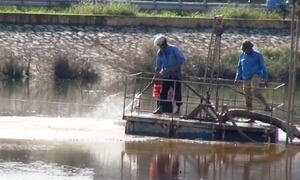 Nhà máy nước sạch xả bùn thải ra hồ điều hòa