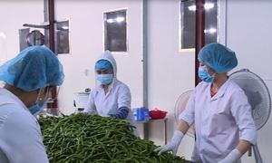 Công nghệ sản xuất ớt xuất khẩu
