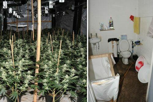 Cảnh sát tìm thấy cần sa và nhà tạm trong trang trại ở Rochdale hôm 14/10. Ảnh:GMP/Manchester Evening News.