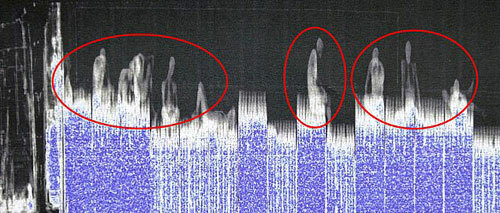 Thiết bị quét X-quang phát hiện người di cư trong một container ở cảng Dover, Anh. Ảnh: DailyMail.