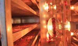 Máy sấy nông sản bằng tia hồng ngoại
