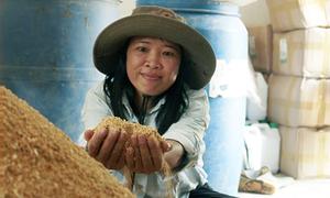 Kinh nghiệm ủ thức ăn chăn nuôi vi sinh ở Sóc Sơn