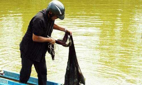 Cá lớn được đánh lưới bán trước sau thời gian nuôi. Ảnh: An Nhiên.
