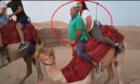 Lạc đà gục ngã vì bị du khách lấy thịt đè người