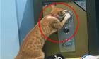 Chú mèo má» trá»m kÃt sắt của chủ nhÃ