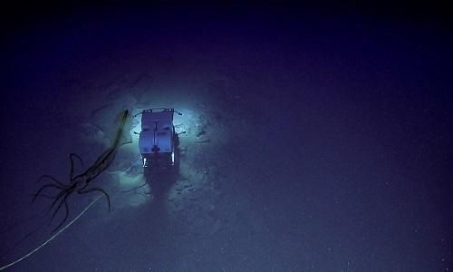 Con mực áp sát phương tiện Deep Discoverer trong bóng tối đại dương. Ảnh: NOAA.