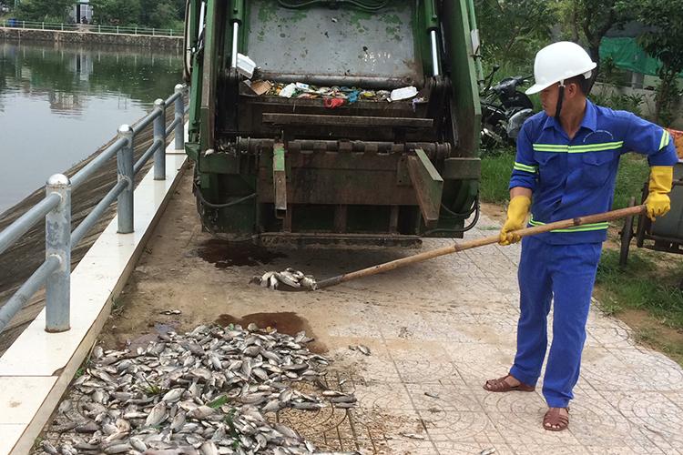 Công nhân vớt cá chết từ hồ Đại An. Ảnh: Hoàng Táo