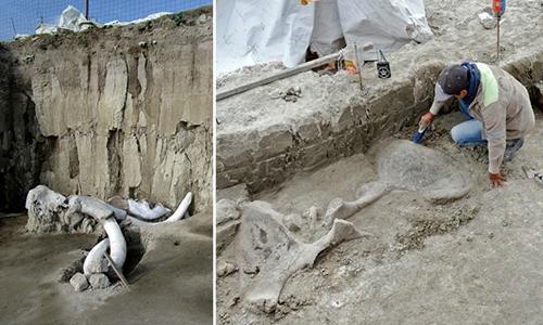 Chuyên gia khai quật mồ chôn voi ma mút ở Mexico. Ảnh: AFP.