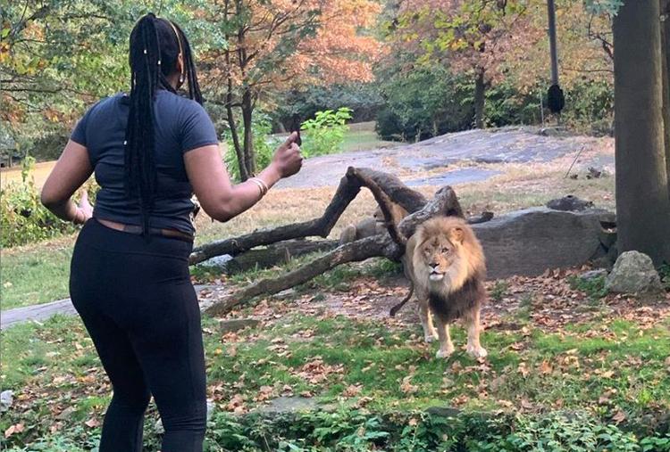 Con sư tử đực ban đầu không có phản ứng. Ảnh: realsobrino/Instagram.