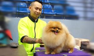 Hàng trăm chú chó thi sắc đẹp