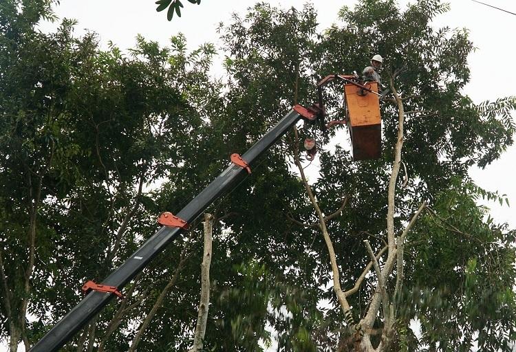 Công nhân môi trường đô thị ở Quảng Ngãi chặt cànhcây trước bão Nakri. Ảnh: Phạm Linh.