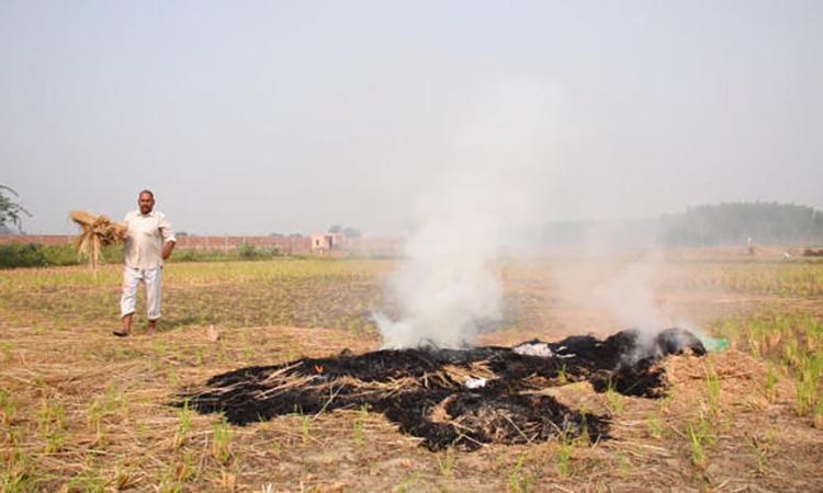 Rohtash, một nông dân ở Sonepat, bang Haryana đốt ra trên cánh đồng của anh. Ảnh: CBS News.