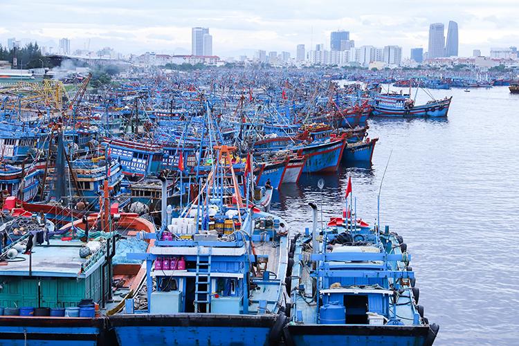 Tàu thuyền vào Âu thuyền Thọ Quang (Đà Nẵng) tránh bão. Ảnh: Nguyễn Đông.