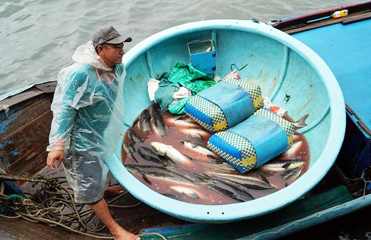 Lo sợ bão gây thiệt hại, người dân thị xã Sông Cầu (Phú Yên) thu hoạch cá bớpsớm đưa vào cảng bán, sáng 10/11. Ảnh: Việt Quốc.