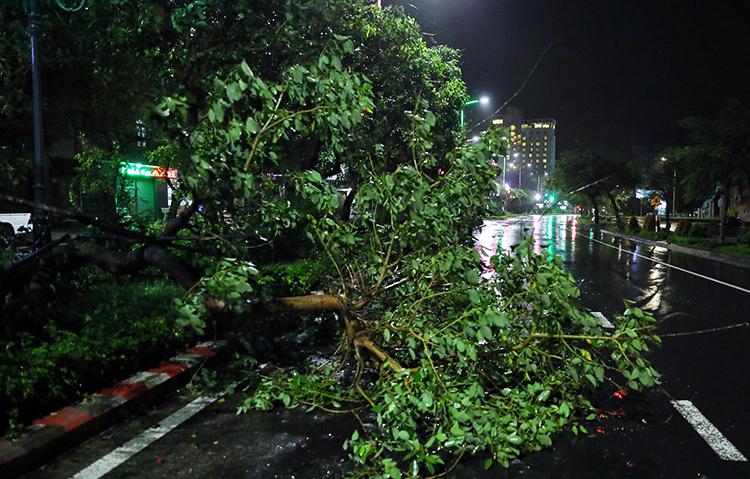 Cây ngã trên đường phố Tuy Hòa. Ảnh: Hữu Khoa.