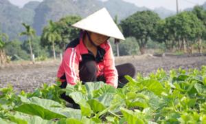 Nông dân Bắc Ninh thi đua sản xuất kinh doanh giỏi