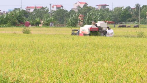 Người dân sử dụng máy móc trong thu hoạch gạo.