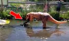 Khủng long nghịch dại nhảy vào chuồng trêu cá sấu