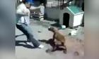 Người đàn ông chạy thục mạng vì trêu chó