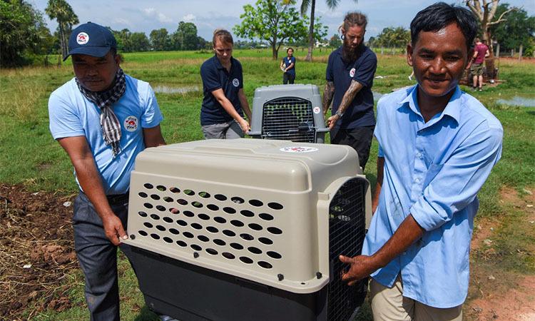 Khieu Chan (phải) tham gia giúp đỡ tổ chức phi chính phủ Four Paws giải cứu các chú chó bị bệnh ngày 27/10. Ảnh: AFP.