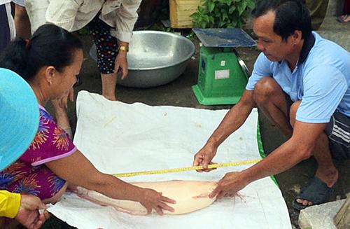 Người dân địa phương cho rằng lầu đầu thấy con cá trê màu hồng nặng hơn 5 kg. Ảnh: Nguyễn Chiến