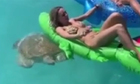 Người đẹp bikini tá hỏa vì bị rùa biển tấn công