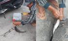 Cần thủ giật cá liên tục ở hố ga trên phố Sài Gòn
