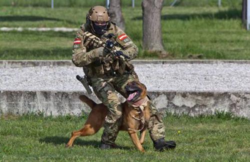 Một binh sĩ thuộc lực lượng đặc nhiệm tinh nhuệ Jagdkommando của Áo tham gia huấn luyện cùng chó. Ảnh: Pinterest