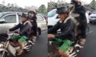 Chú chó đội mũ bảo hiểm, ngồi sau xe máy như người