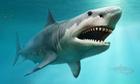Hóa thạch tiết lộ loài cá mập ăn thịt đồng loại