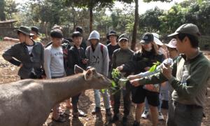 Du khách tận tay cho thú rừng ăn ở vườn quốc gia Bù Gia Mập