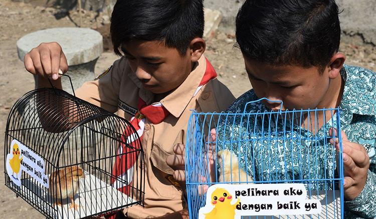Các học sinh ở Bandung nhận gà con về nuôi hôm 21/11. Ảnh: AFP