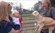 Em bé bắt chước tiếng kêu dê con