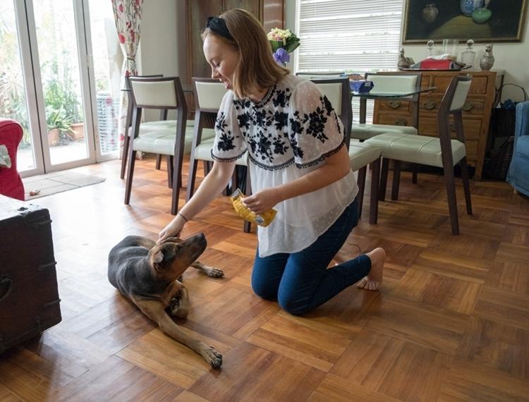 Hàng trăm chó bị đánh bả không có lời giải ở Hong Kong