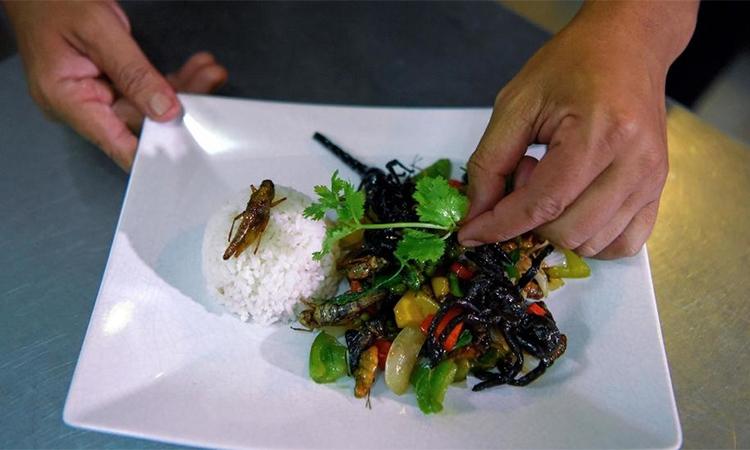 Một món ăn làm từ côn trùng ở nhà hàng Bugs Cafe, Siem Reap, Campuchia. Ảnh: AFP.