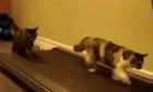Hai con mèo thích chạy bộ