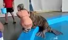 Người đẹp hốt hoảng vì bị hải cẩu sàm sỡ