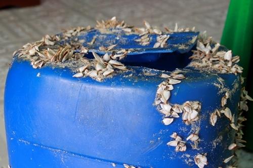 Can nhựa đóng vẹm, hàu chứng tổ trôi dạt trên biển đã lâu. Ảnh: Võ Thạnh