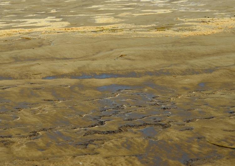 Bọt biển đóng váng đen khi tấp vào bờ. Ảnh: Phạm Linh.