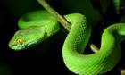 Con rắn đang lấp ló ở đâu trong khu vườn?