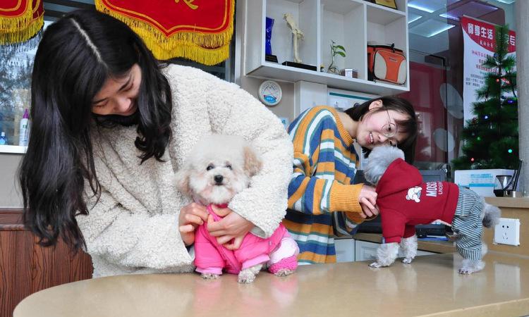 Hai con chó được mặc đồ tại bệnh viện thú cưng ở Liêu Thành, Trung Quốc. Ảnh: China Daily.