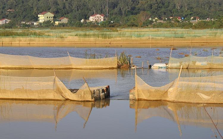 Người dân quây lưới khắp cánh đồng rộng hàng chục ha ở xã Xuân Hồng. Ảnh: Đức Hùng